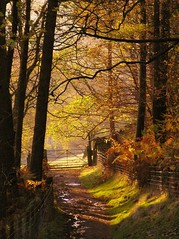 North Lees track (Roger B.) Tags: autumn topf25 woodland gate derbyshire peakdistrict muted darkpeak peakdistrictnationalpark northlees mutedcolor