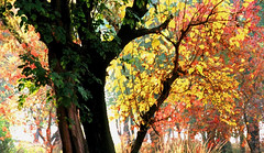 Rustic Fall (!!sahrizvi!!) Tags: 2005 autumn trees pakistan light red orange tree green fall nature silhouette yellow landscape ilovenature gold nikon rust natural outdoor rustic silhouettes backlit karachi foilage islamabad ruleofthirds nikon6006 rizvi sahrizvi sarizvi rusticfall 13rdrule nikonstunninggallery