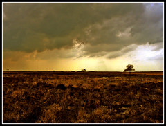 Drentsche heide (sole) Tags: moors drenthe heide holland thenetherlands landscape rural europe 2005 sky tinted