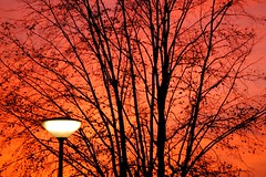 Amsterdam Sunset (ElseKramer) Tags: pink light sunset sky 15fav orange tree lamp amsterdam silhouette backlight weesperzijde elsekramer