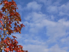 pretty tree, pretty sky (highglosshighs) Tags: 2005 november blue autumn red sky white tree leaves japan clouds fluffy  toyama fukumitsu