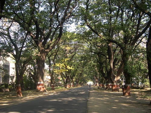 Way to the Agriculture Collage, Pune