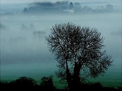 Above the mist (algo) Tags: tree misty fog photography interestingness topf50 topv555 topv1111 chilterns topv999 vale explore algo explore33