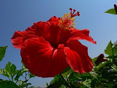 Bright and beautiful day - by Pandiyan