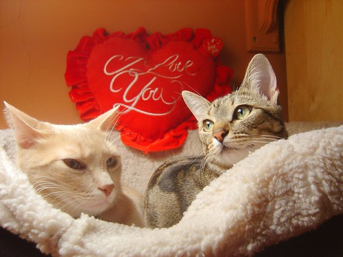 cute valentine's day kittens cat pic
