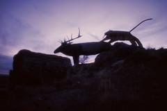 Stewart's Petrified Wood (Colton Davie) Tags: sunset arizona film 35mm folkart desert tiger january slide roadtrip painteddesert diffusion magichour sabertooth 2012 reversal stewartspetrifiedwood canoneoselan7 nikon28mmf28eseries hairsprayfilter
