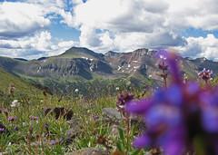 The Absaroka Giants (jennneal818) Tags: sky mountains flower nature clouds outdoors big purple backpacking yellowstone wildflowers wyoming sheer wy absarokas absaroka