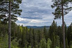 Natur (P. Burtu) Tags: trees summer tree nature forest sweden natur skog sverige dalarna träd sommar våmhus älvdalen