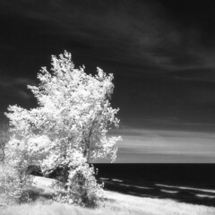 Port Crescent Park IR (scott_z28) Tags: trees blackandwhite bw lake 120 6x6 tlr film beach nature water monochrome mi mediumformat landscape ir bay coast waves michigan surreal hc110 shore infrared epson v600 yashica hoya 635 efke r72 saginawbay dilutionb portcrescent ir820