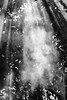 Nature and smoke (Roberto Cararine) Tags: nature smoke nikon 35mm bw black white light d3100 shadow wide angle nikonflickraward