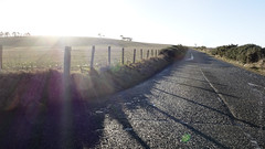 HFF!! (Elisafox22 catching up ;o)) Tags: elisafox22 sony rx100 fencedfriday hff fencefriday wooden fencepost barbedwire road tarmac shadows sunshine lensflare fields roadside trees aberdeenshire scotland outdoors elisaliddell©2017