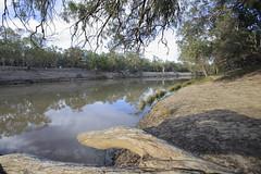 2016.11.18.06.04.03-Darling River (www.davidmolloyphotography.com) Tags: newsouthwales darlingriver menindee kinchega kincheganationalpark lakemenindee