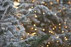 Pine tree (sonia.sanre) Tags: pine tree christmas lights bokeh snow navidad decoration christmasdecoration