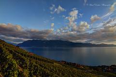 Lavaux (Pascal Dentan) Tags: haveaniceday vignoble lavaux vigne lake lac léman geneva genfersee ciel nuage sky cloud nature view vue vert bleu eau swiss switzerland suisse schweiz raisin vin