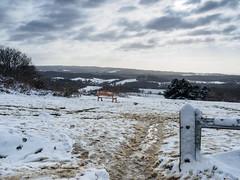 Newlands Corner in the Snow E1130340_04 (tony.rummery) Tags: bench em10 gate guildford landscape mft microfourthirds newlandscorner omd olympus snow surreyhills winter albury england unitedkingdom gb