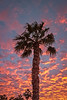 Palm Tree Sunset (http://fineartamerica.com/profiles/robert-bales.ht) Tags: arizona fineart flickr foothills haybales people photo photouploads places projects scenic states sunrisesunset sunrise sunset street palmtree southwest red yellow landscape silhouette clouds desert twilight sunrays orange nature beautiful colorful bright stunning mountain morning sensational spectacular cirrus southwestern horizon sonoran panoramic awesome magnificent peaceful surreal sublime magical spiritual inspiring inspirational tranquil sunlight wallpaper yuma robertbales