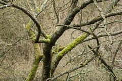 20170104-_IMG1018-Edit (fleetingphotons) Tags: pentaxk1 smcpentaxa200mmf28ed wasingestate fishing warrenbeat kennet trees
