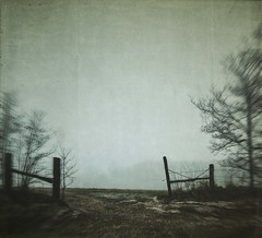opening (jssteak) Tags: canon t1i fog morning rural pasture texas gate fence trees