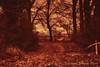 Anche d'inverno, radici per terra e testa verso il cielo (Gianni Armano) Tags: inverno radici per terra testa verso cielo alberi campagna provincia alessandria piemonte italia foto gianni armano photo flickr