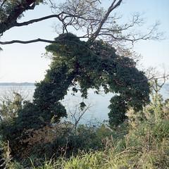 arch (TKBou) Tags: japan setonaikai ogijima arch 日本 瀨戶內海 男木島 拱門 アーチphotographer フォトグラファー instalike instagood 写真好きな人と繋がりたい ファインダー越しの私の世界 sea 海 film hasselblad portra400 scenery 日本の風景