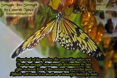 Struggle Into Strength (casarahnance) Tags: county camera lake butterfly clare poem harrison thomas houghton quill poetryart nance roscomon casarah dowgardenssunday acameraandaquillcom