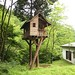 yuichi takeuchi built this treehouse for a friend