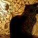 Cat behind screen