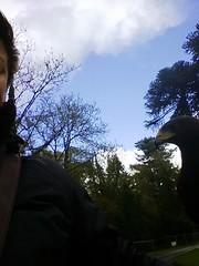 Falconary Ireland008