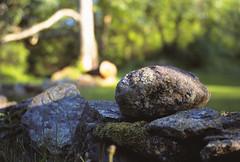 M43_02 (colinpoe) Tags: landscape stonewall rockwall goldenhour provia100f medalistii salofarm