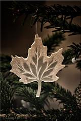Maple leaf  52/52 (Missy2004) Tags: 116picturesin2016 nikkorafs18105mm3556ged christmas trinket 52weeksfornotdogs