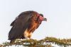 Waiting (Hector16) Tags: kenya2014willdlife 2014 kenya wildlife naboishoconservancy olseki naboisho hemingways mara masaimara narok ke ngc