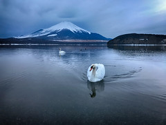 Swan Lake (shinichiro*) Tags: 南都留郡 山梨県 日本 jp 20170119img6417edithdr 2017 crazyshin appleiphone7plus iphone winter january fuji lakeyamanaka dawn beforesunrise redmatrix 31593423424 726385 201703gettyuploadesp
