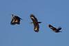 1DM44335  woodpecker (dave v) Tags: 1d4