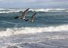 synchronous flight, Morro Bay, CA (vtpoly) Tags: montañadeorostatepark california morrobay centralcoast pacific ocean water waves gulls seagulls birds sky beach polywoda