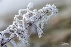 freezing winter (Tiziano Photography) Tags: hoarfrost ice branch winter nikond610 d610 nikon galaverna inverno gelido ramo ghiaccio