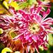 Flower's Beauty