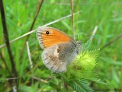 Butterfly 1133 (+450000 views!) Tags: butterfly borboleta farfalla mariposa papillon schmetterling فراشة