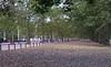 UK 2016 725 (Visualística) Tags: uk unitedkingdom reinounido gb greatbritain england inglaterra ciudad city urbano urban parque park londres london londra