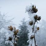 hiver thumbnail