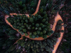 """Sensuality. (¡arturii!) Tags: wow amazing awesome superb interesting stunning impressive nice beauty great arturii arturdebattk """"canonoes6d"""" gettyimages travel trip tour route viatge holidays vacations drone drones dron aerial up above overhead path way curve sensuality trees firs forest tall shape visual cool montseny catalonia catalunya europe forets woodland dji phantom3"""