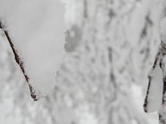 Branches Snowpocalypse 2017_03