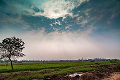 The rays coming through the clouds gave a blissful view and reminded me of Sun as a life source. (Kalyana Kavuri) Tags: landscape nature sky tree sunset cropland daylight fog light sun agriculture grass travel field cloudscape clouds lightrays india andhra rural beautiful bliss