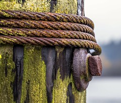 Piling (Paul Rioux) Tags: wharf dock piling wood moss cable rust bolt prioux