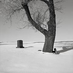 In a Cemetery, Oakesdale, Washington (austin granger) Tags: cemetery oakesdale washington palouse death snow winter tree headstone bark square film gf670