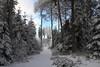Der Weg zum Zauberwald (Xtraphoto) Tags: schnee snow bäume wald forest bayern bavaria trees wonderland landschaft landscape winterlandschaft frosty winter winterwonderland