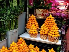 Mongkok Flower Market #4 in Mongkok (Fuyuhiko) Tags: mongkok flower market 6 旺角 香港 hong kong