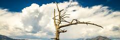 John Muir Country!  Kings Canyon & Sequoia National Park! Sony A7r & Sony 16-35mm Vario-Tessar T FE F4 ZA OSS E-Mount Lens! (45SURF Hero's Odyssey Mythology Landscapes & Godde) Tags: storm clouds zeiss lens t landscape photography dr sony fineart fe za muir sequoia f4 a7 johnmuir stormclouds kingscanyon joh naturephotography oss carlzeiss kingsriver landscapephotography 1635mm johnmuirtrail variotessar a7r breakingstorm 45surf breakingthunderstorm fineartlandscape fineartlandscapes thnderclouds sonyzoom sonya7 emount elliotmcgucken sonya7r 45surffineart thundercloudsstorm