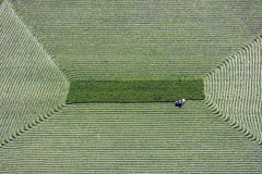 Very Accurate (Aerial Photography) Tags: field grass by landscape bayern landwirtschaft feld aerial gras hay agriculture landschaft deu ernte heu luftbild harvesting luftaufnahme m obb deutschlandgermany heuernte 24062001 bauernmalerei schwindegg fotoklausleidorfwwwleidorfde farmerspainting schwindegglkrmhldorfainn d3014331