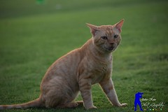 Cat (jetho_keto) Tags: