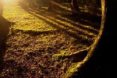 Atardecer en el bosque de Isla Chaulln / Helvecia (MartinaPo) Tags: chile sunset nature forest atardecer bosque sur turismo isla calbuco islahelvecia chaulln